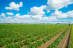 Agriculture photo stock