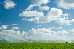 Irrigating plantation Stock Photos