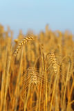 Agriculture Images libres de droits