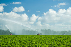Watering plantation Royalty Free Stock Photo