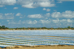 Crops covered with plastic film Royalty Free Stock Photos