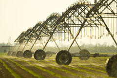 Sprinkler irrigation Stock Photos