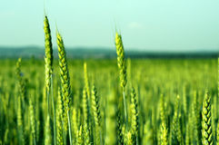 Agriculture Stock Images