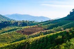 Agriculture Image libre de droits