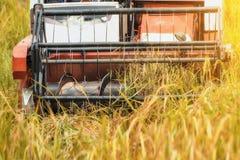 Agriculture Photos libres de droits