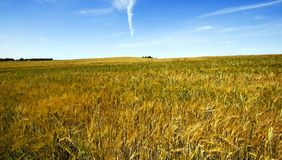 Agriculture Stock Image