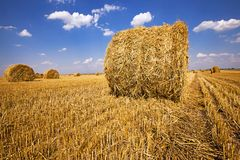 Agriculture Royalty Free Stock Photo