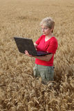 Agriculture, agronomist examine wheat field Stock Image