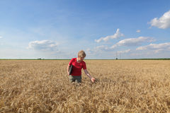 Agriculture, agronomist examine wheat field Stock Photography