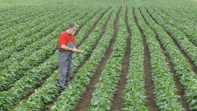 Agriculture, agronomist or farmer examine soy bean field stock video