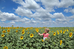 Agriculture, agronomy. Agricultural expert inspecting quality of sunflower in field stock photography