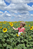 Agriculture, agronomy. Agricultural expert inspecting quality of sunflower in field stock images