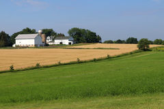 Agriculture, agronomy and farming background. Summer countryside landscape with green grass field and ripe wheat field on a foreground and farm buildings stock photos