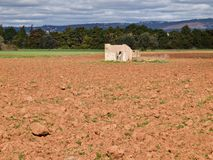 Agriculture at the algarve coast or Portugal royalty free stock photos