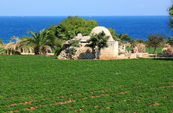 Agriculture along the Adriatic coast, Italy Stock Image