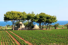 Agriculture along the Adriatic Sea, Italy. Trulli shaped sheds between the fields with rows of vegetables in the neighbourhood of Moli di Bari in the south of royalty free stock images