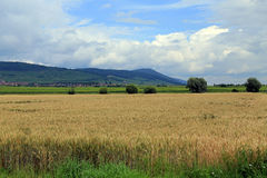 Agriculture in Alsace, France Royalty Free Stock Photos