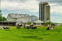 Agriculture amish de champ de grange de ferme de pays et vaches à pâturage à Lancaster, PA image libre de droits