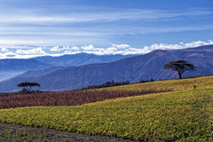 Agriculture in the Andean highlands Stock Photography