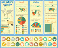 Agriculture, animal husbandry infographics, Vector illustrations Stock Images