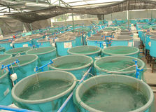 Agriculture aquaculture farm Stock Photo