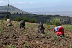Agriculture and arable farming in Kenya. The Agriculture and arable farming in Kenya stock photography