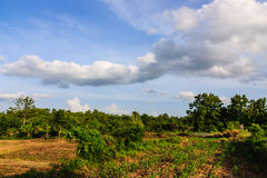 Agriculture area   with sky clouds Royalty Free Stock Photos