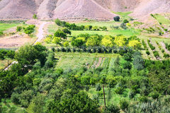 Agriculture in Armenia stock photography