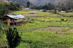 Agriculture of Arunachal Pradesh Royalty Free Stock Photo