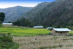 Agriculture of Arunachal Pradesh. Agriculture is the main source of earning of Arunachal Pradesh. About 53% of the total cultivated area is under Jhum and the Royalty Free Stock Photography