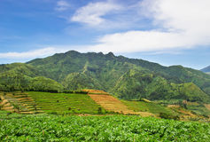 Agriculture in Asia. beautiful landscape Royalty Free Stock Photo