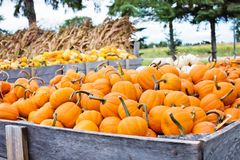 Agriculture, Autumn, Cropland stock images