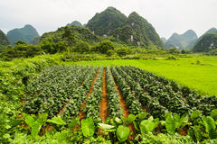 Agriculture and beaturiful karst mountains Stock Photos