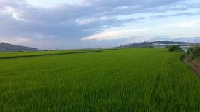 Agriculture. Beautifully farming south korea.. lovely nature Royalty Free Stock Images