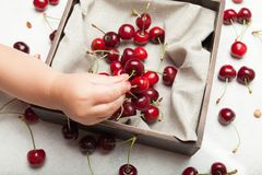Agriculture berry background, delicious cherry royalty free stock photos