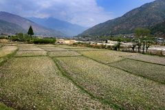 Agriculture of Bhutan Royalty Free Stock Images
