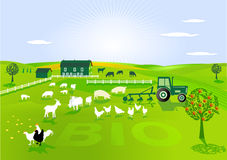 Agriculture biologique Photo stock