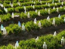 Agriculture biologique photographie stock libre de droits