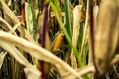 Agriculture, Blur, Bright Stock Photo