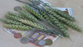 Agriculture business concept – euro banknotes wheat ears stock video