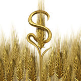 Agriculture Business Royalty Free Stock Photos