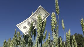 Agriculture business money concept on farm field stock footage