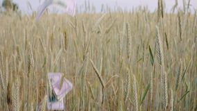 Agriculture business money concept on rye field. falling USA usd dollar banknote on rye ears. slow motion. Agriculture business money concept on rye field stock footage