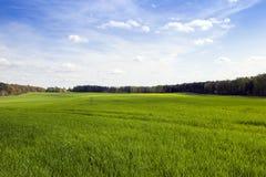 Agriculture céréales Ressort Photographie stock