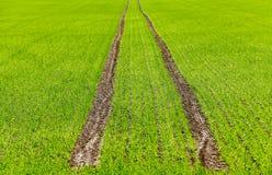 Agriculture céréales Ressort Images stock