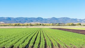 agriculture california Stock Image