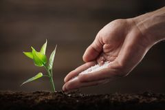 Agriculture. Care concept conservation conserve corporate csr Royalty Free Stock Image