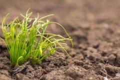 Agriculture Centrales croissantes Jeunes usines de bébé Photo libre de droits