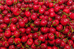 Agriculture - Cherry orchard Stock Photography
