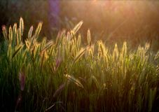 Agriculture, Close-up, Countryside Royalty Free Stock Image
